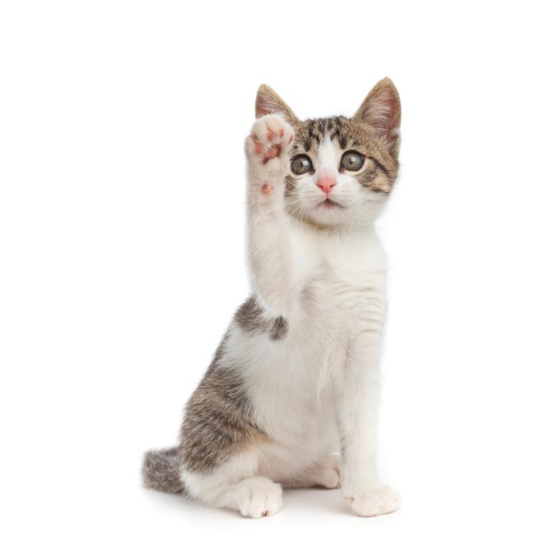 29250-Cat-Doorbell-Katzenklappe-Katzenklingel-Tuerklingel-3.jpg