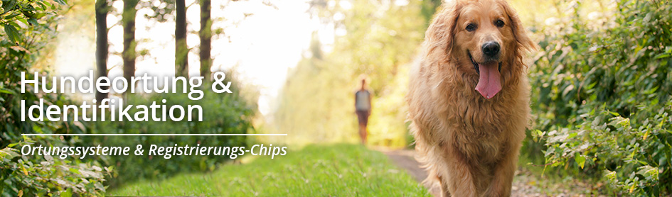 Chipreader & RFID-Chips
