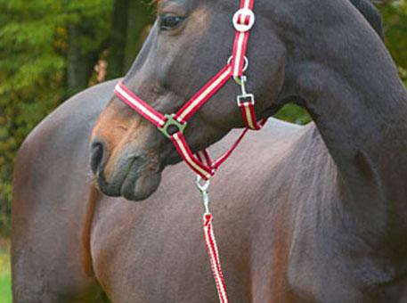 pferde-halfter-stricke