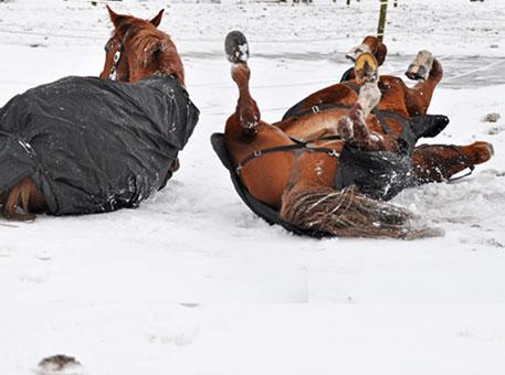 pferde-pferdedecken